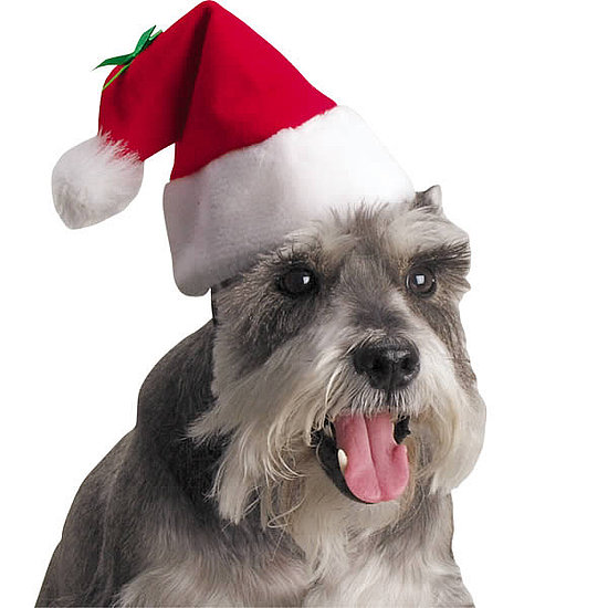 3606fa4bcb3b89f3_Christmas-dog-wearing-cute-santa-hat_preview